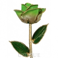 Living Gold Roses 2-Tone Light Green Rose Trimmed in 24k Gold (August)