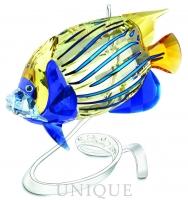 Swarovski Crystal Emperor Angelfish, Jonquil