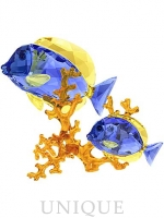 Swarovski Crystal Doctorfish Couple
