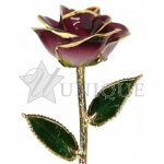 2-Tone Burgundy Rose Trimmed in 24k Gold (February)