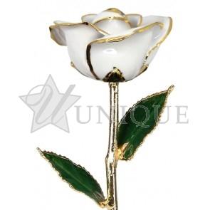 Snow White Rose Trimmed in 24k Gold (April)