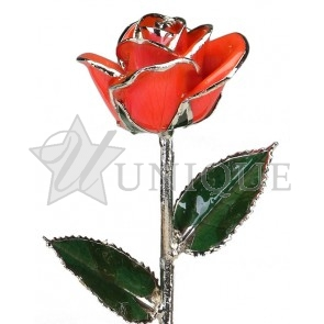 Bright Red Rose Trimmed in Platinum (July)