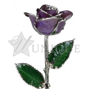 Purple Rose Trimmed in Platinum (October)