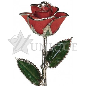 Red Rose Trimmed in Platinum (January)