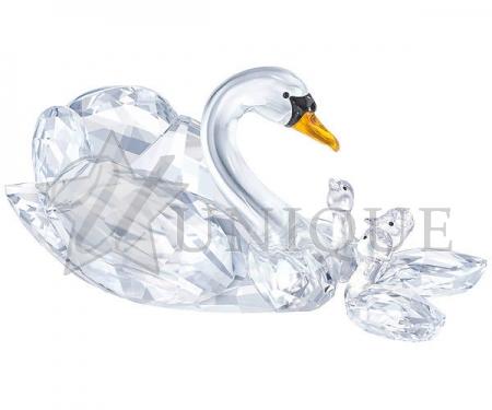 SCS Jubilee Edition 2017 Swans